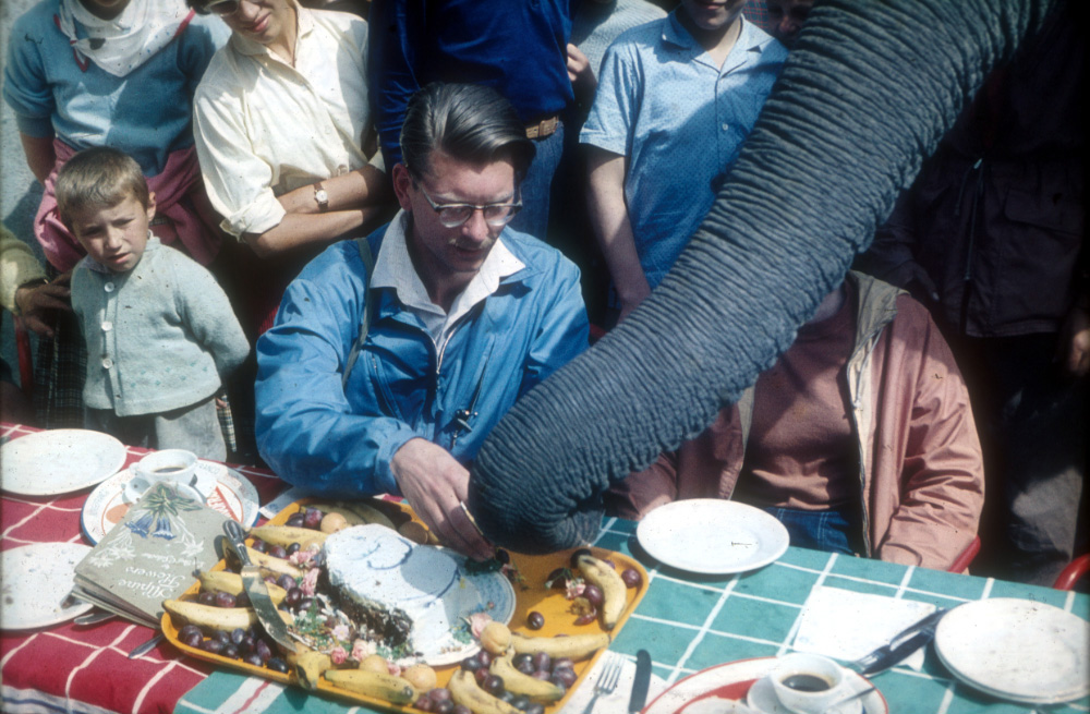 Jumbo getting the first slice of our elephant cake, in celebration of our crossing into Italy.