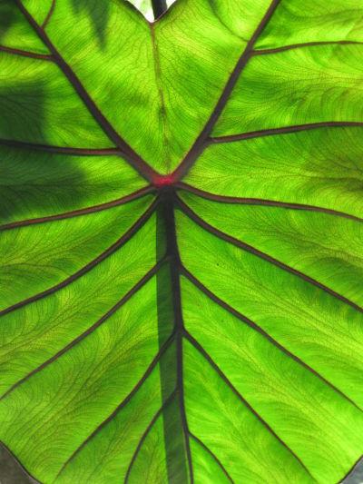 leaf_opt.jpg