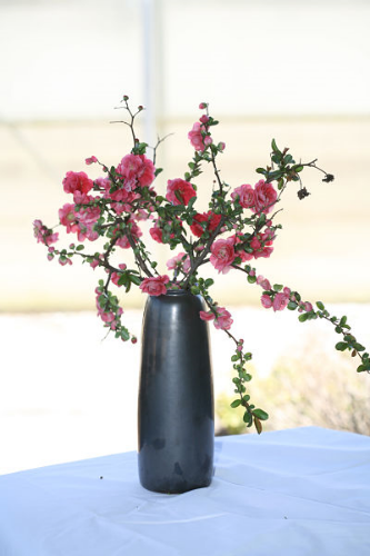 'Pink Storm' quince/Proven Winners