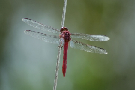 Dragonfly - Lara Eakins/Flickr