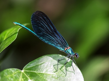 Damselfly - mattharvey1/Flickr