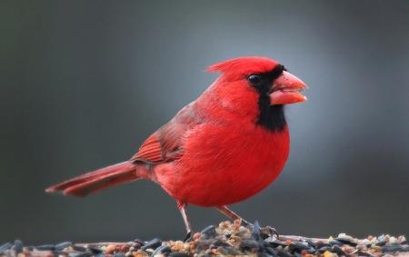 Cardinal  John Flannery/Flickr