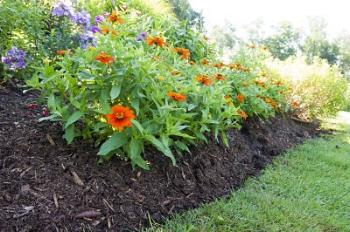 Mulch, on a garden border        Preen