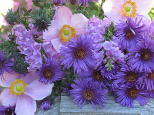 A bouquet of anemones, asters and obedient plant from my garden  — vjs
