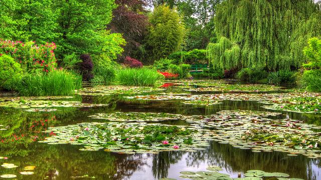 Monet's waterlilies. — Edwademd/Flickr