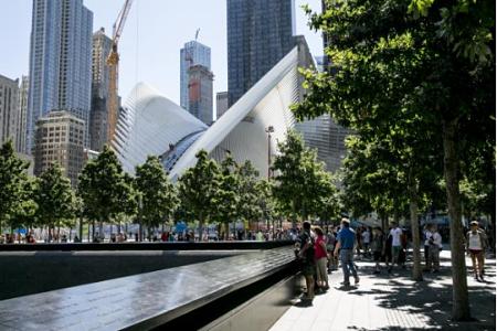 Swamp white oaks at the 9/11 memorial in NYC. — 9/11memorial.org