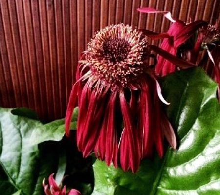 Wilted plants, wilted gardeners. No fun!. — swanksalot/Creative Commons