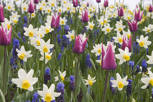 If you want flowers next spring, plant bulbs this fall. — Netherlands Bulb Center