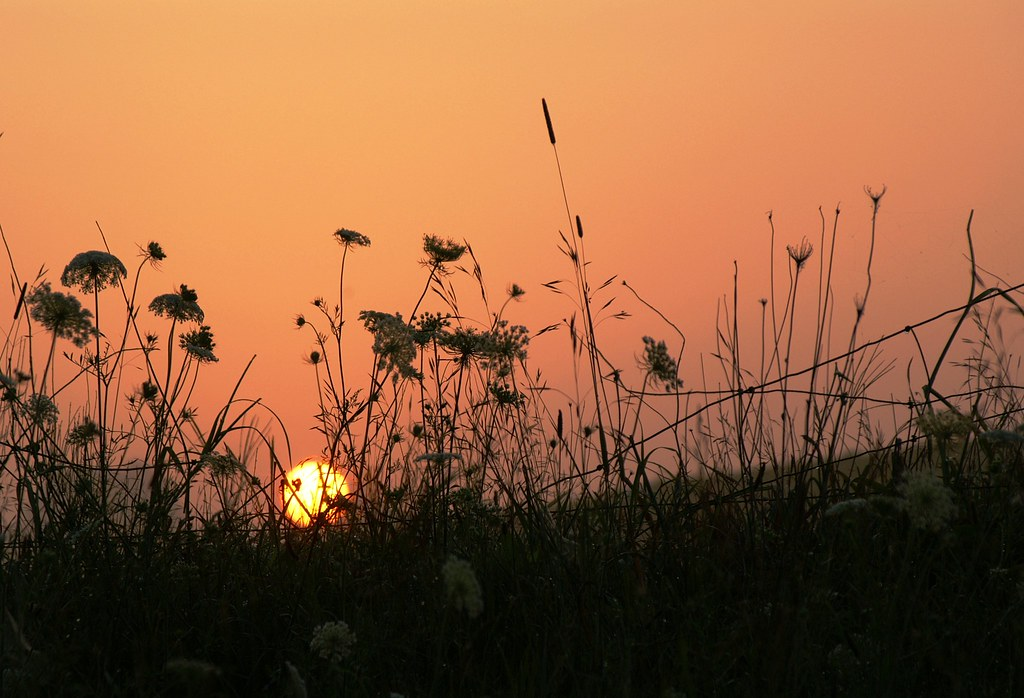 Sunrise. — CaptPiper/Creative Commons