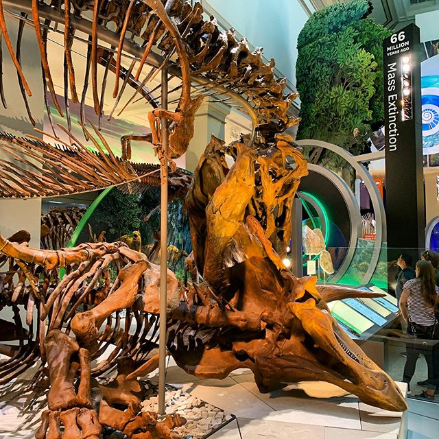 Scenes from the brand new Fossil Hall at the Smithsonian National Museum of Natural History: some days you're the T-Rex, and some days you're the stegosaurus. . . . #naturalhistory #smithsonian #fossilhall #trex #stegosaurus #dinsoaurs #fossil #dc #visitdc #travel #educationaltravel #tourguide #museum #culturalimmersion #visitwashingtondc #history #instatravel #travelgram #america #travelwithkids #curatedbycath #experientialtravel #free #travelusa