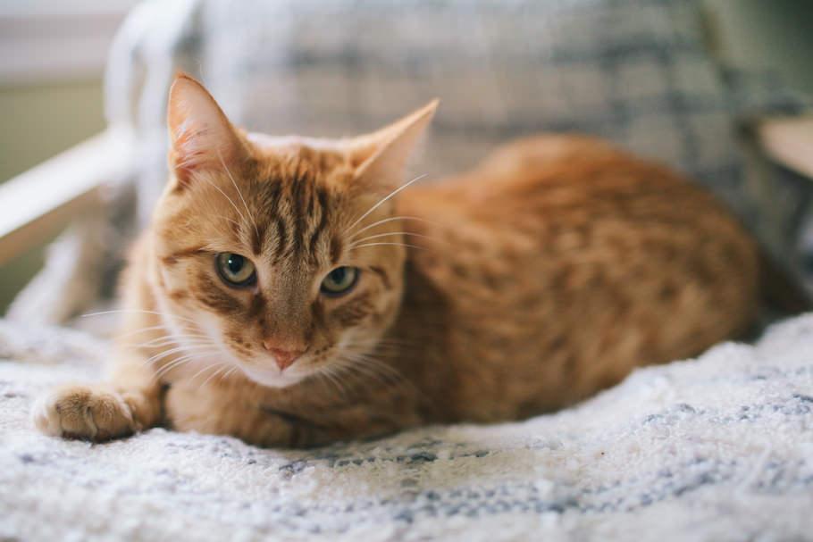 cat_intro_post_26.jpg