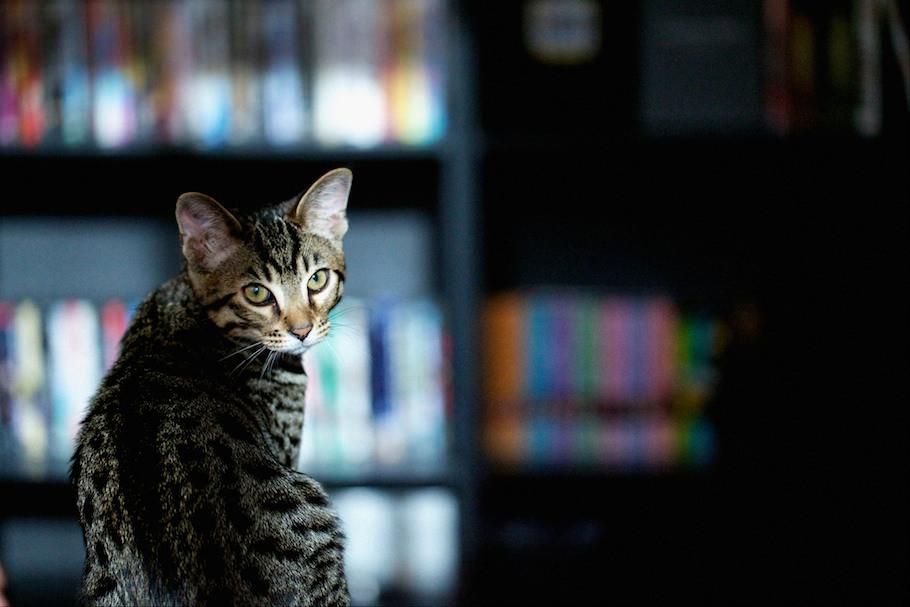 cat_intro_post_2.jpg