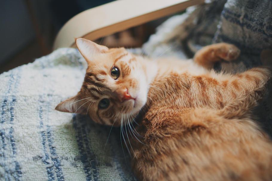 cat_intro_post_1.jpg