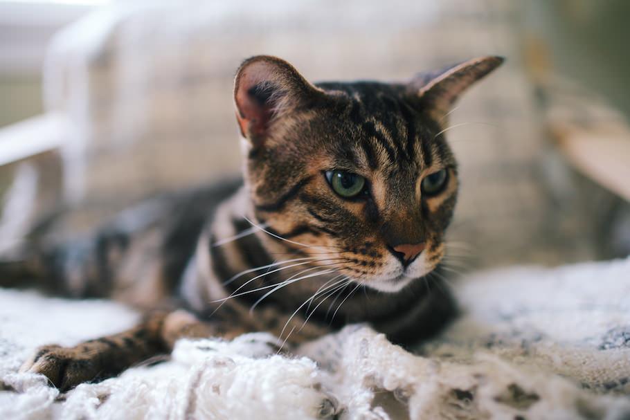 cat_intro_post_27.jpg