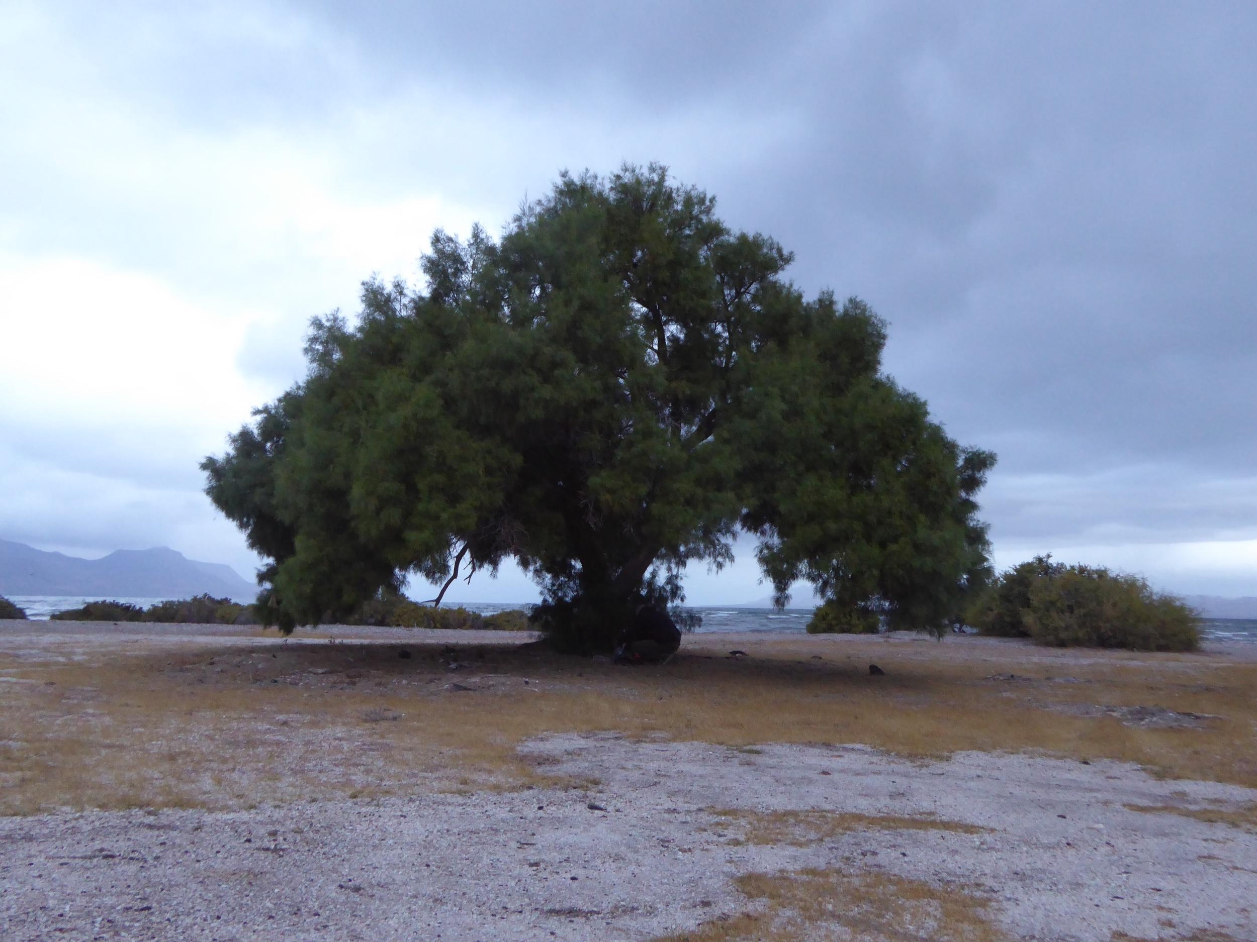 Our favorite Shake tree
