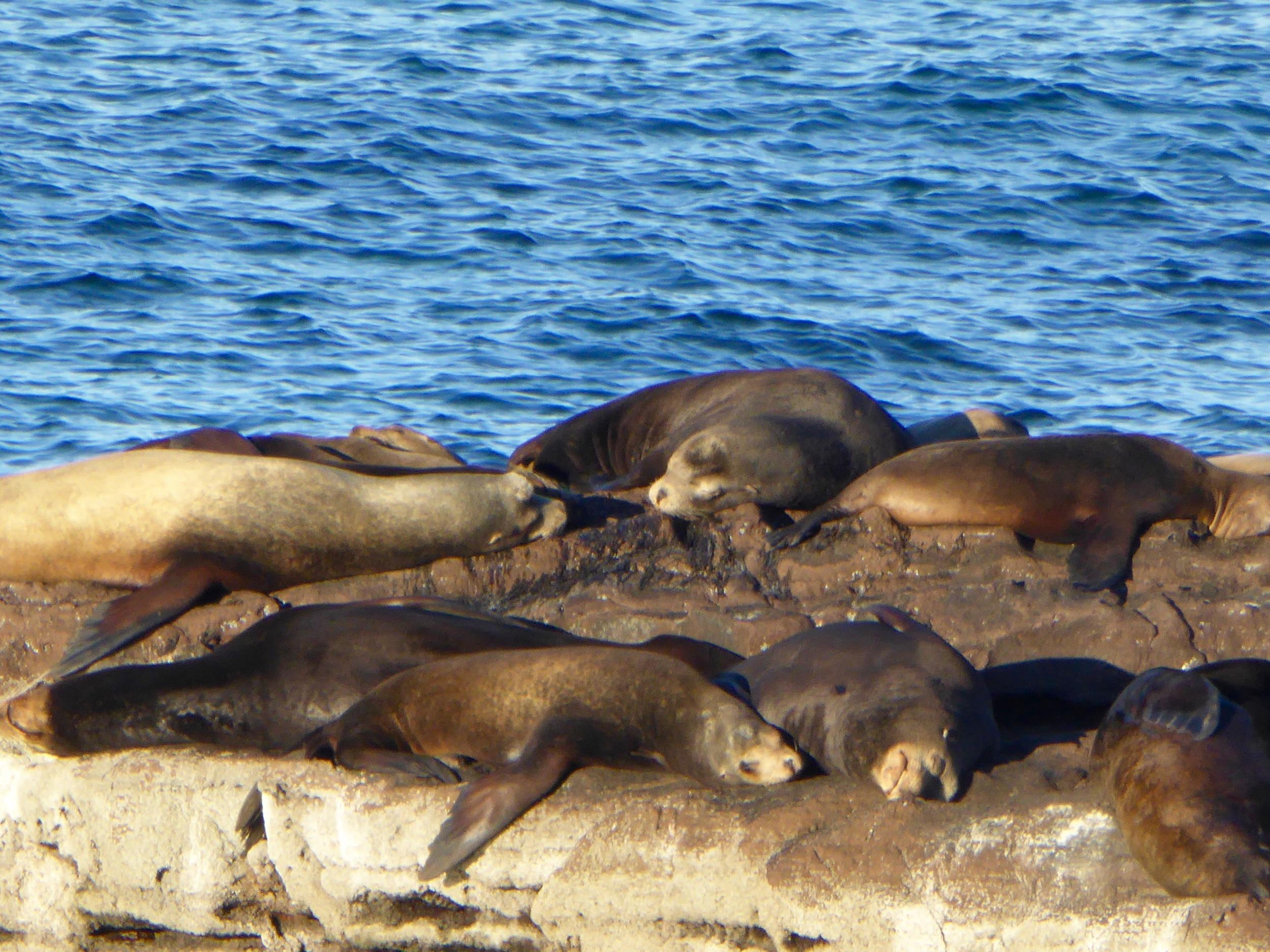 Ca. Sea Lions enjoying the sun