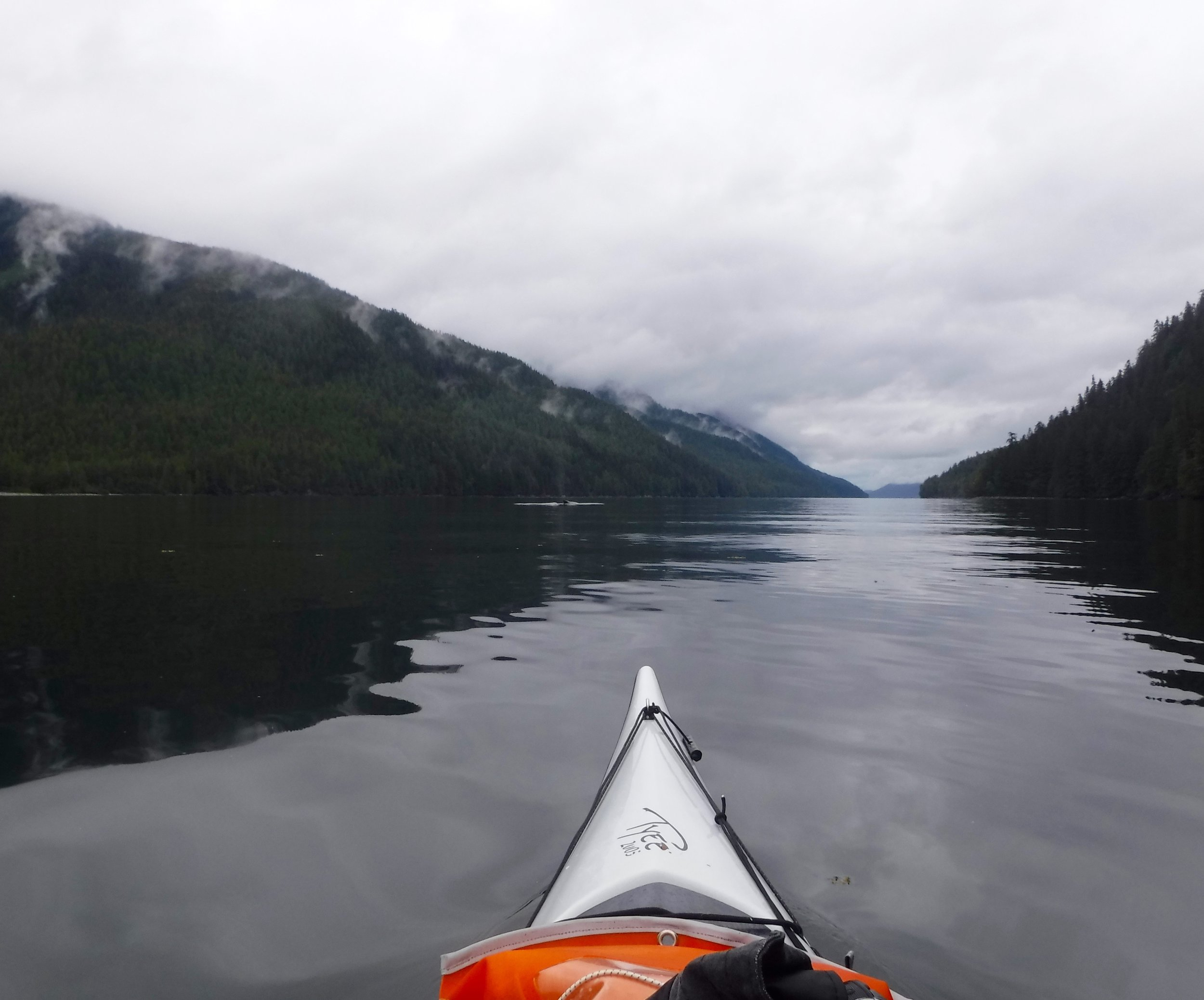 The whale is ahead of the kayak and to the left.
