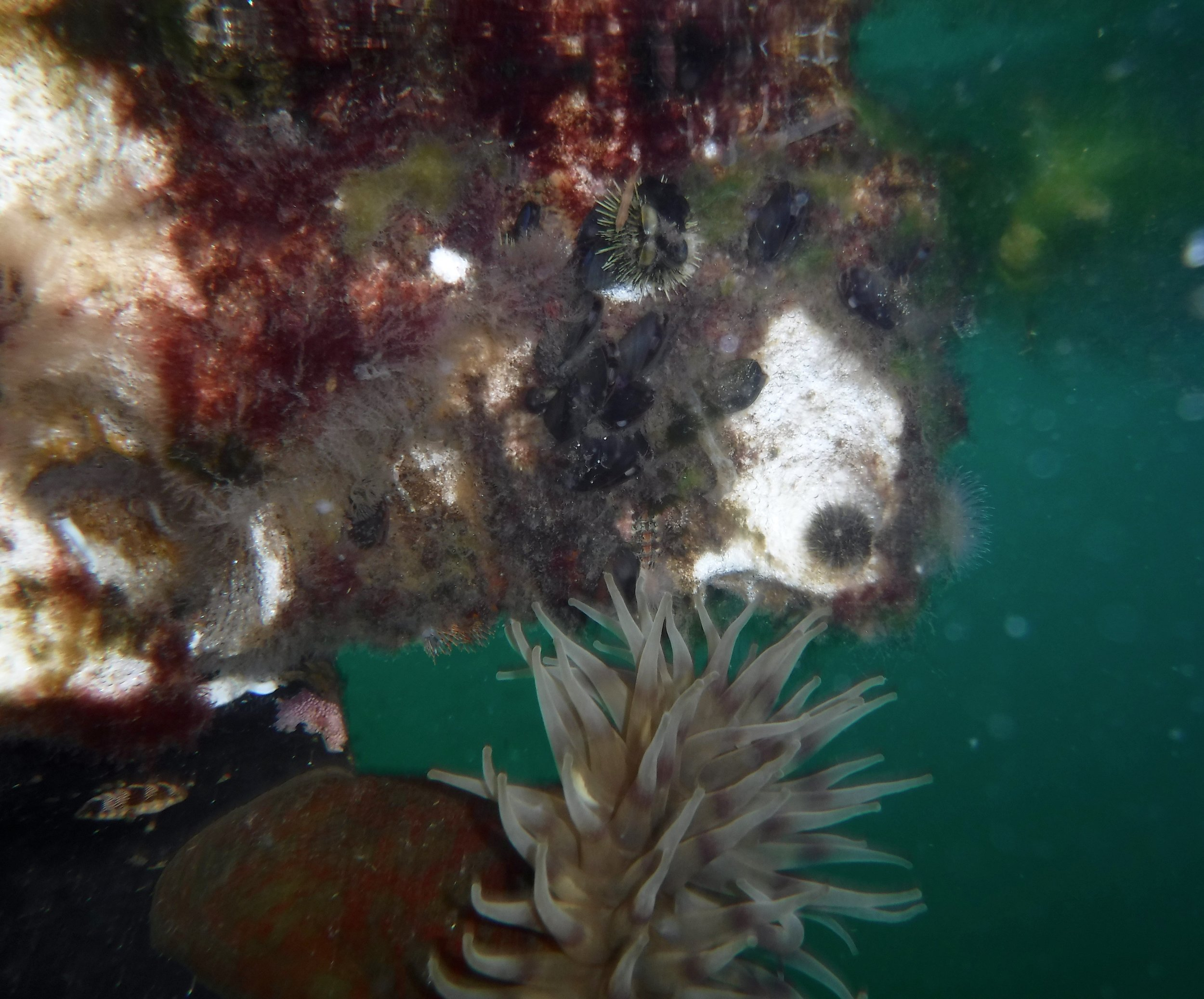 Lot of marine creatures were living under the dock.