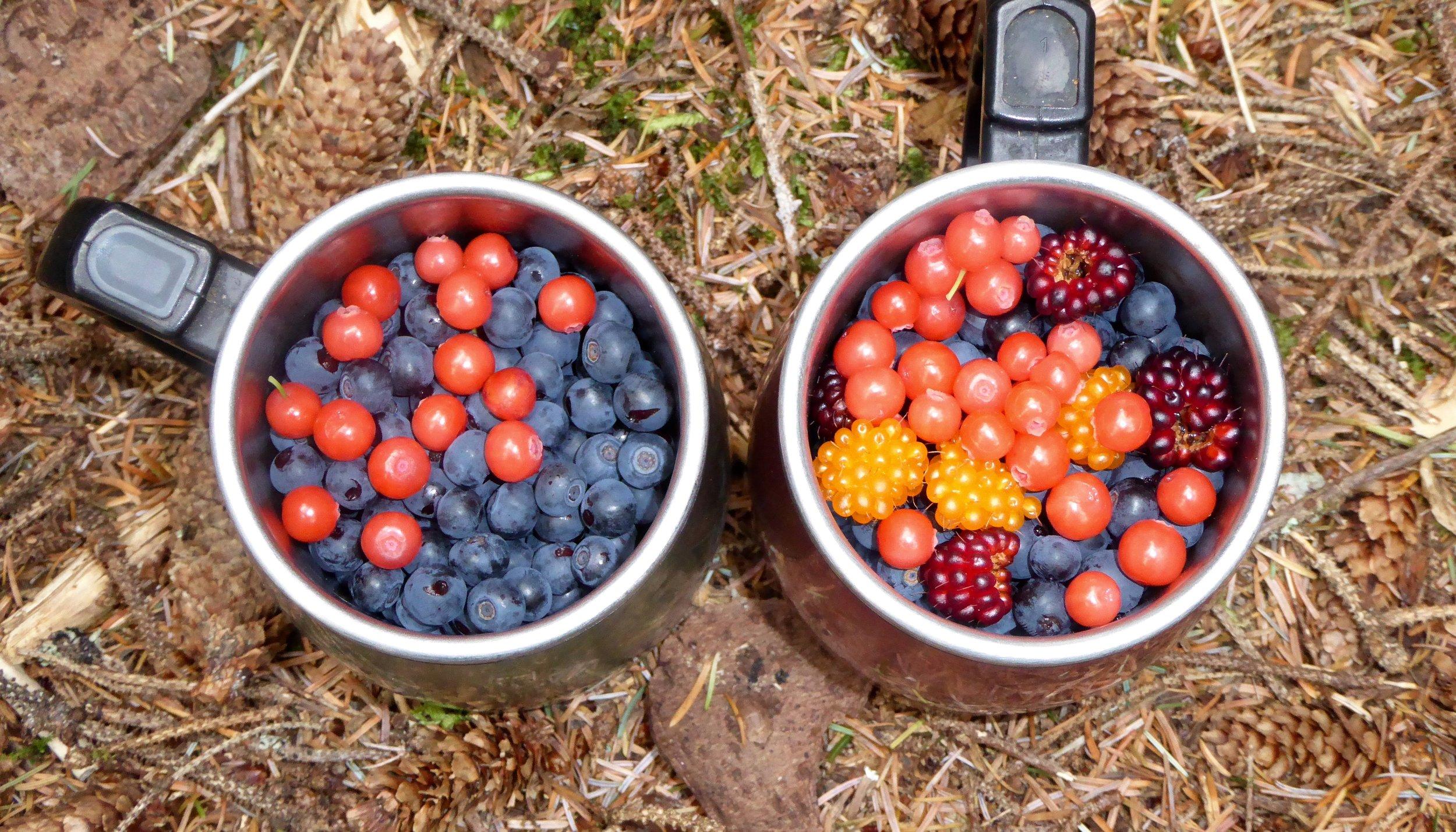 Best berries of the trip.