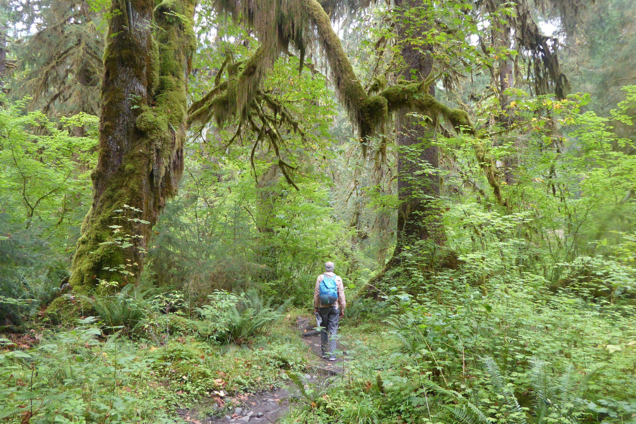 A hike filled with old growth forest.