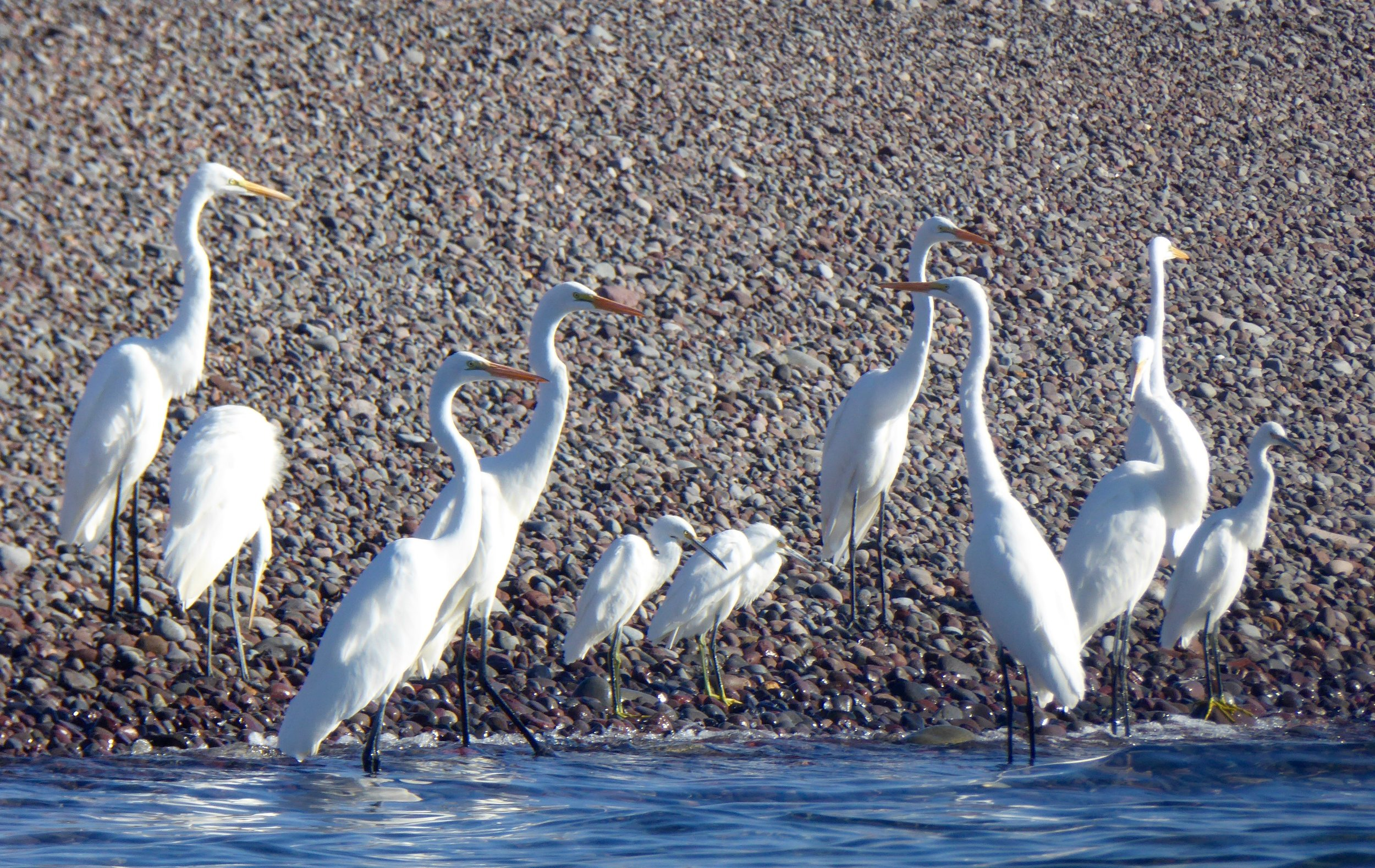 In their white plumage, it was a great contrast to the shore.