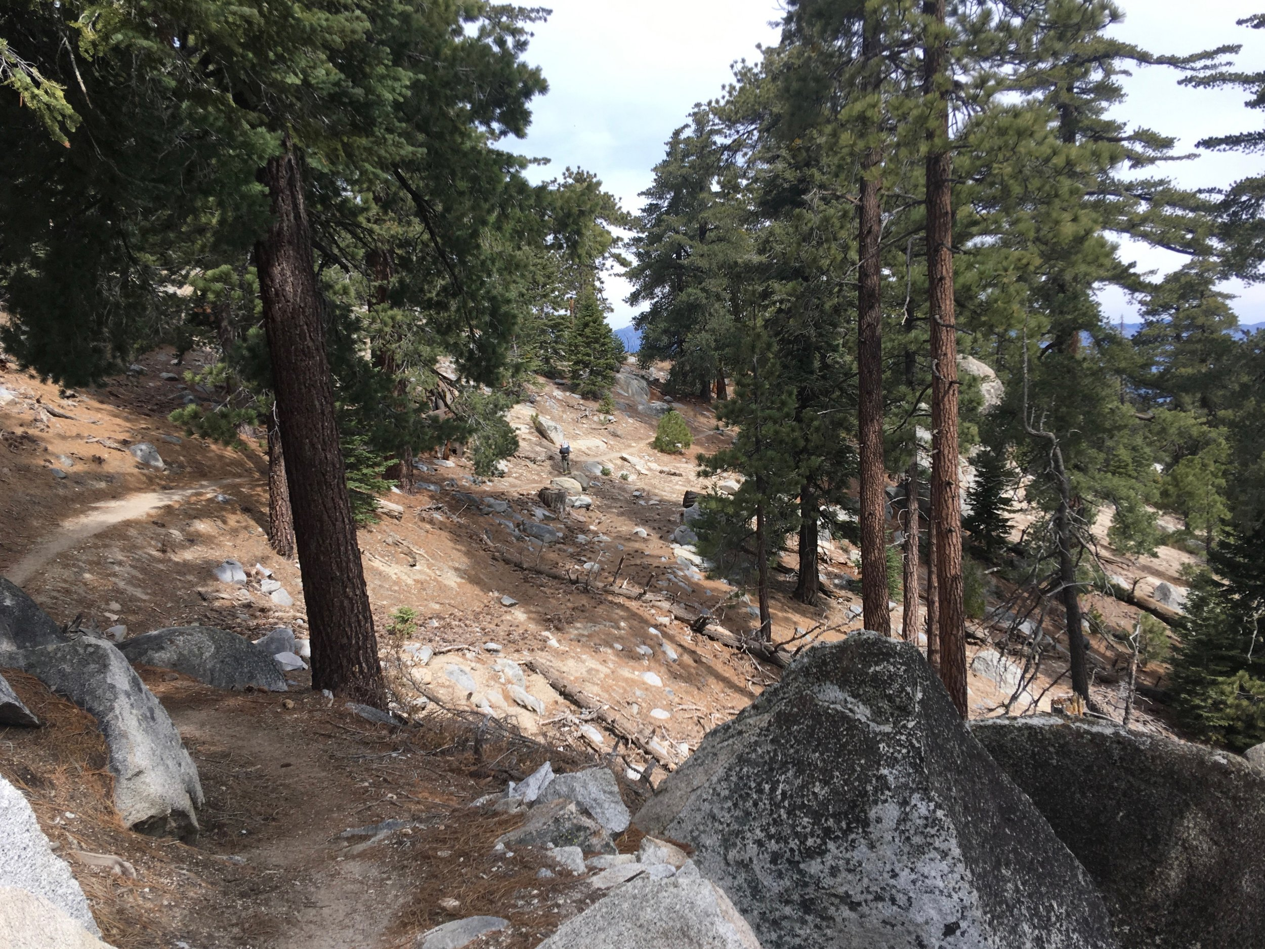It started off with a gentle decline and a trail covered in pine needles.