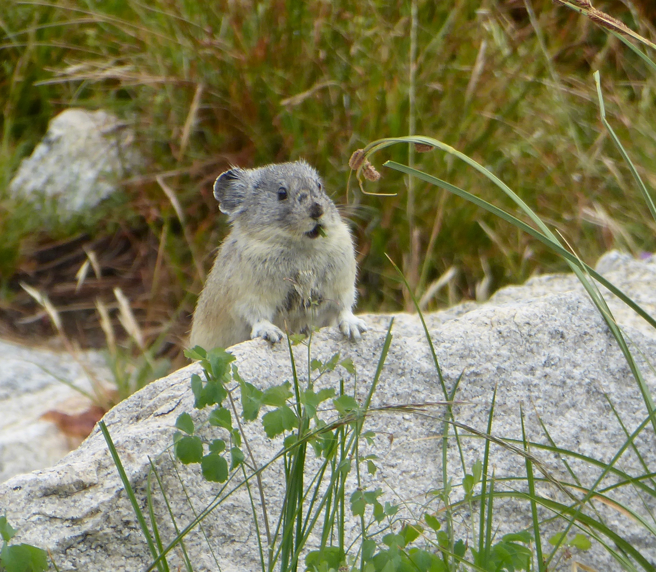 One of our favorite small mammals!