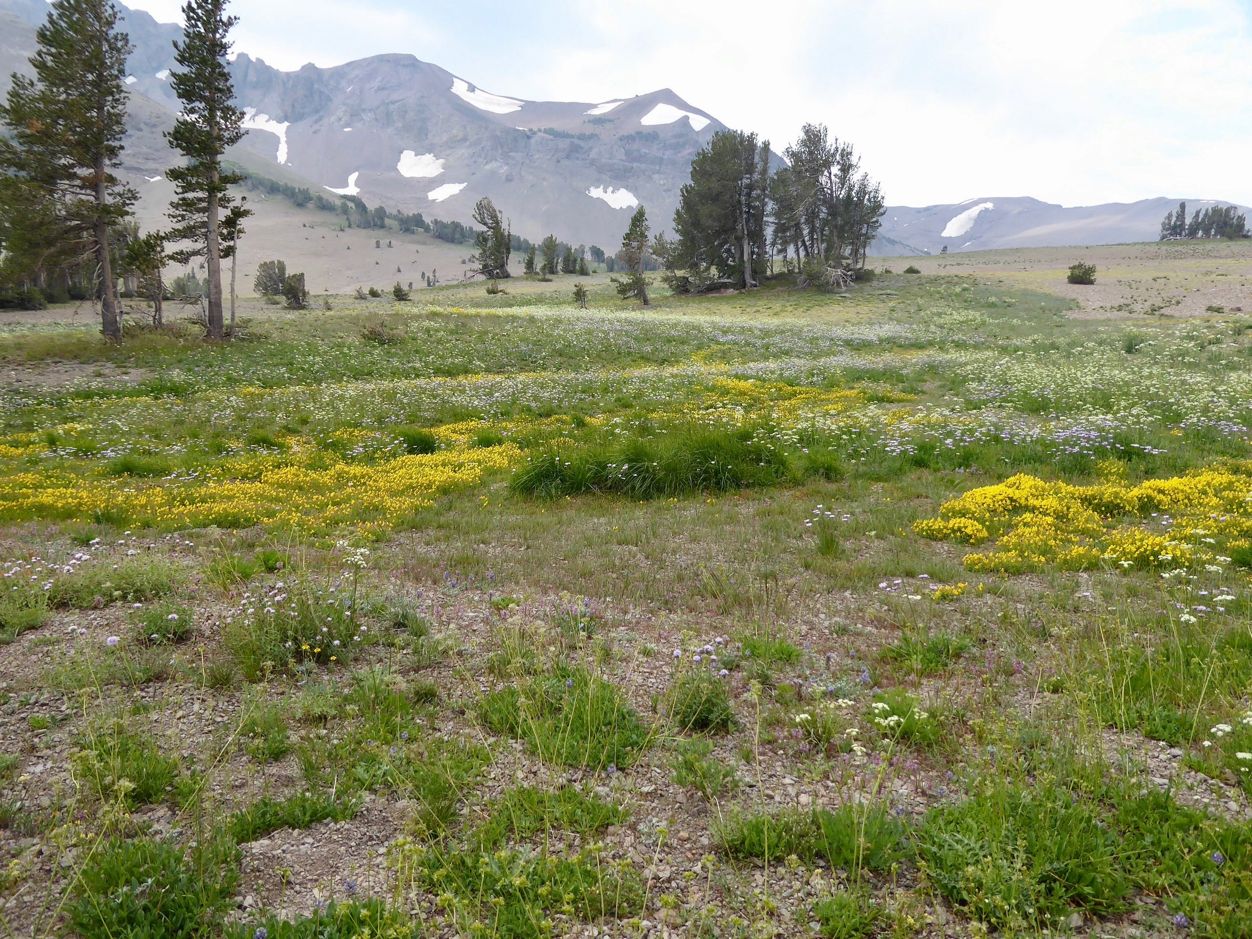 Wildflowers are abundant along the trail