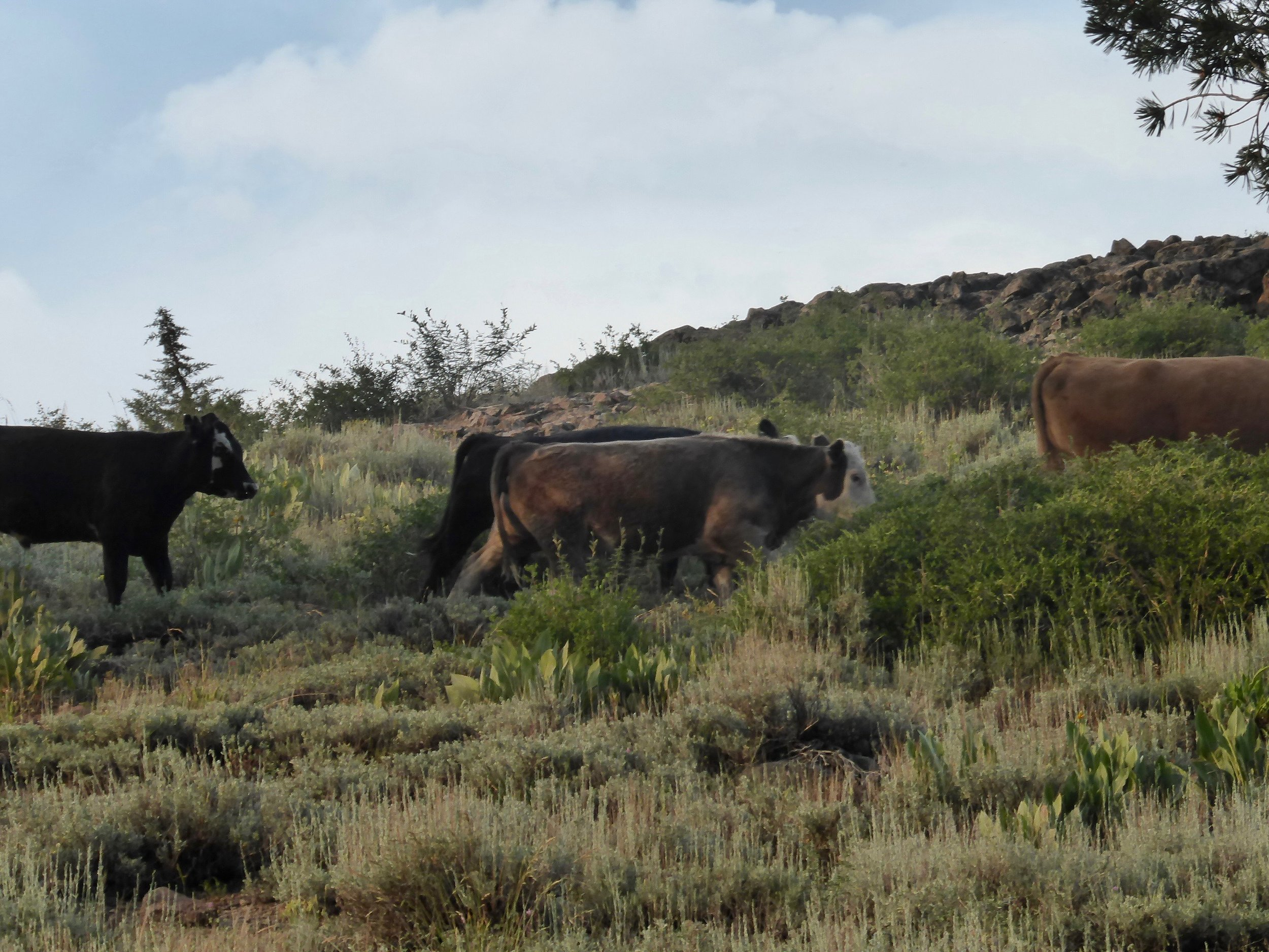 Fortunately the cows weren't interested in us.
