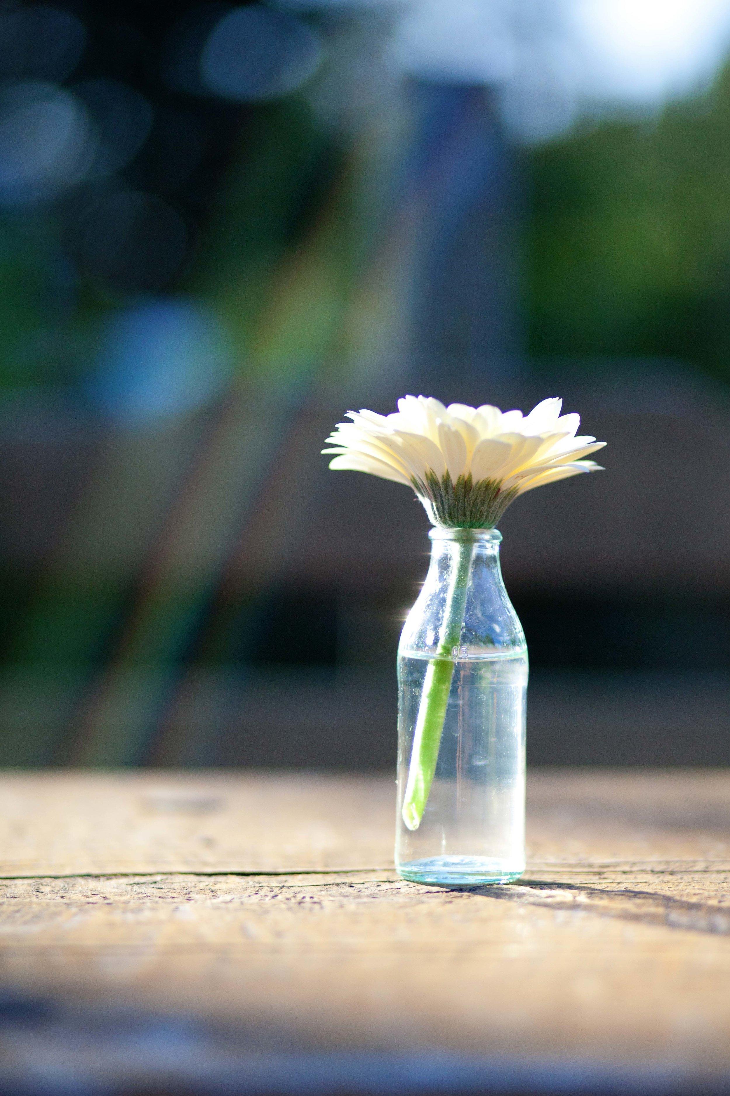 Jeane Marcus flowers-10.JPG