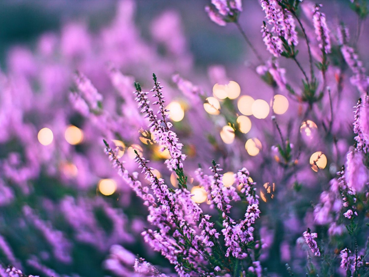 purple flowers and lights representing reiki energy