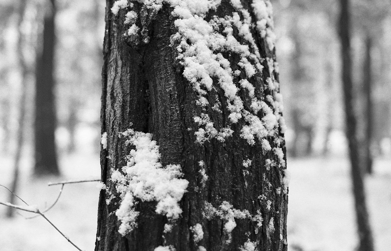 県民の森_2.jpg