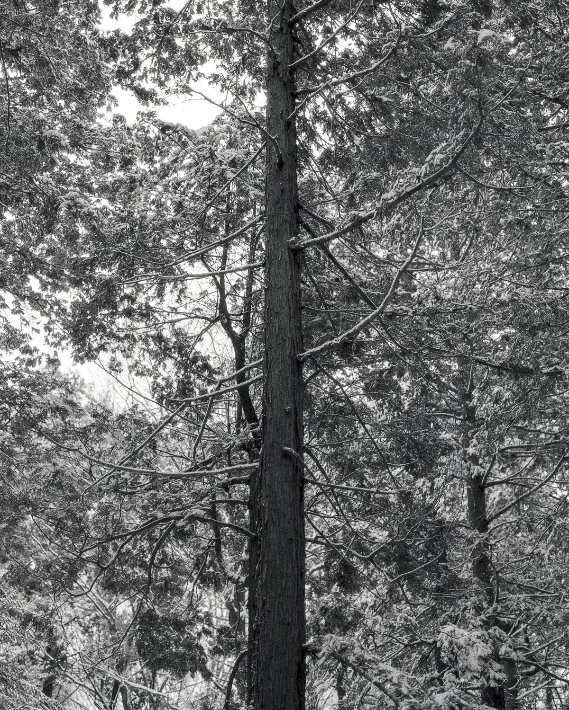 県民の森_1.jpg