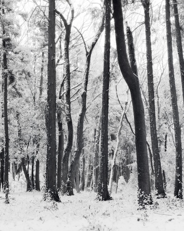 県民の森.jpg