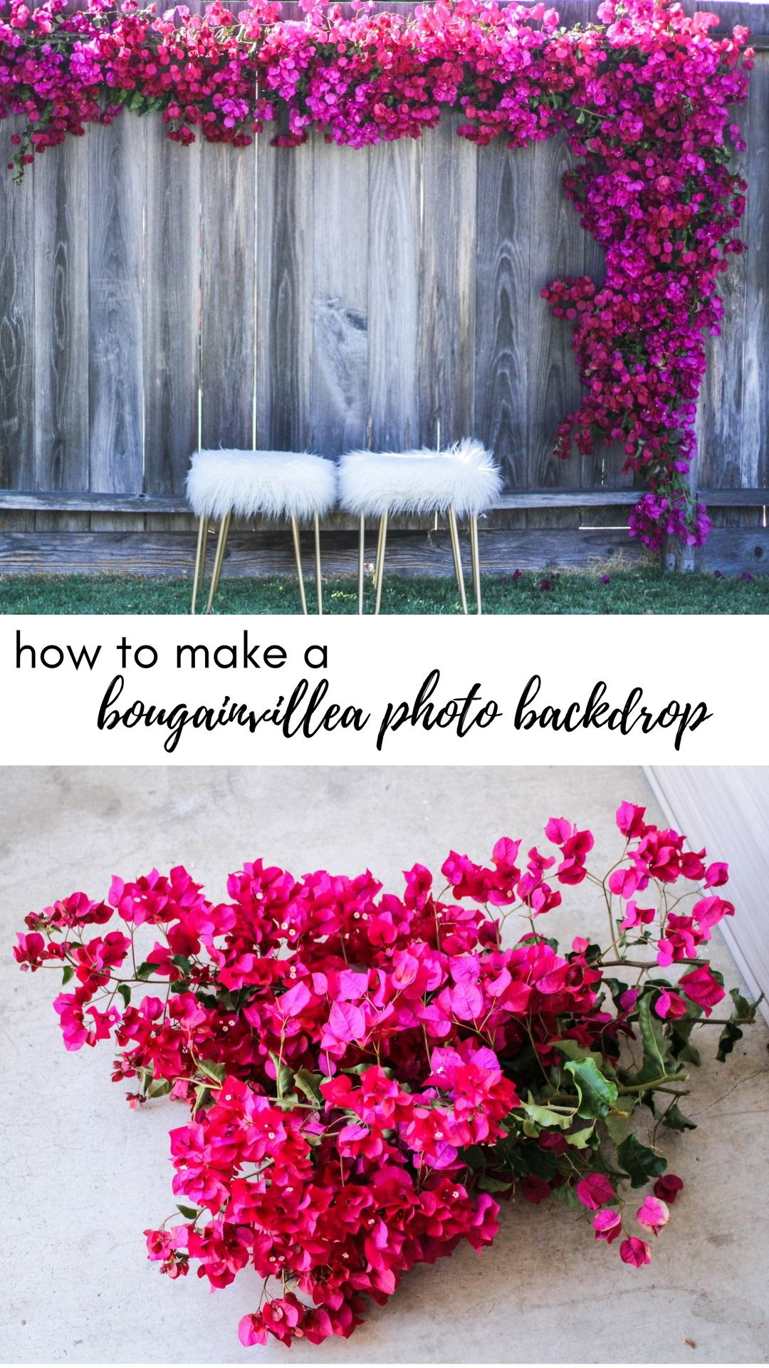 Bougainvillea Photo Backdrop \\  www.crystalcara.com