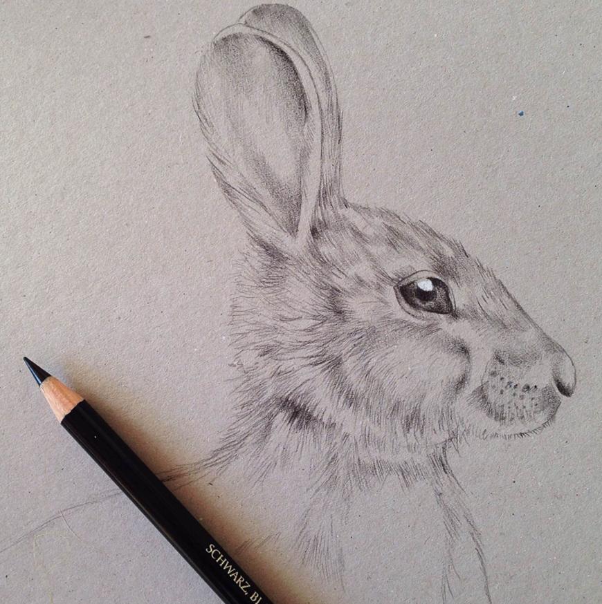 hare_rabbit_Kelly_thompson_art_illustration_drawing_illustrator_blog.jpg