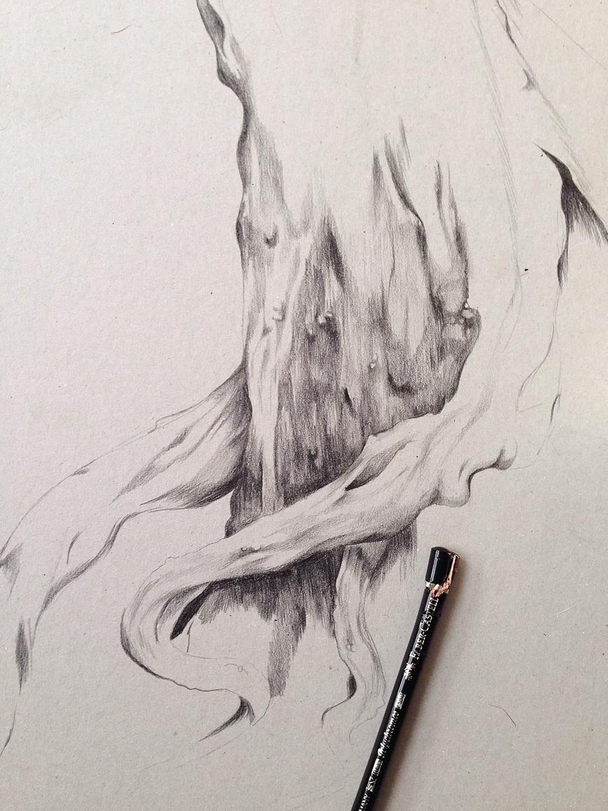 tree_botanical_pencil_sketch_Kelly_thompson_art_illustration_drawing_illustrator_blog.jpg