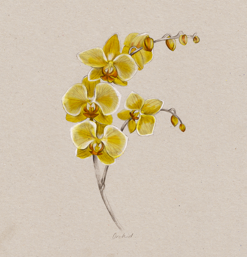 kelly_thompson_blog_illustration_art_botanical_orchid_flower.jpg