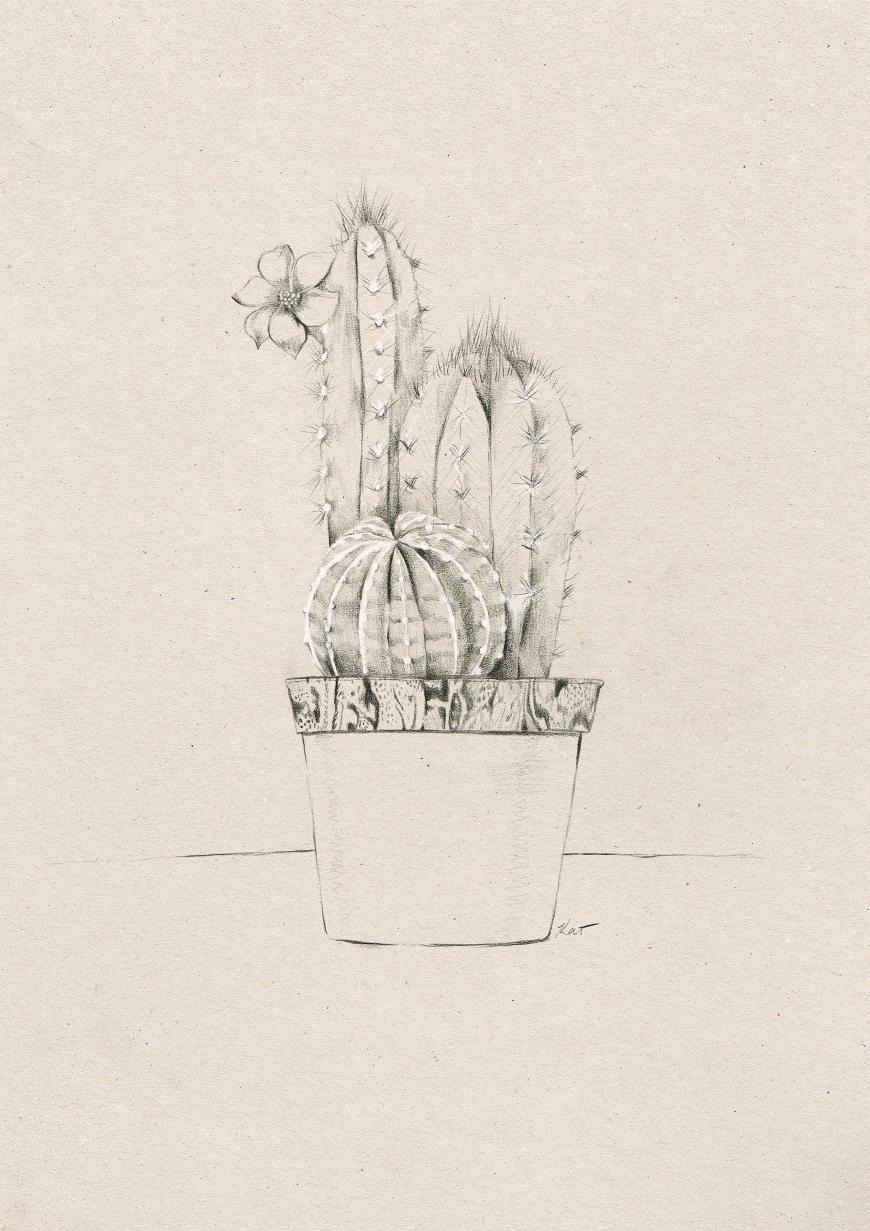 3_Kelly_thompson_Ruby_dreamers_illustration_cactus.jpg