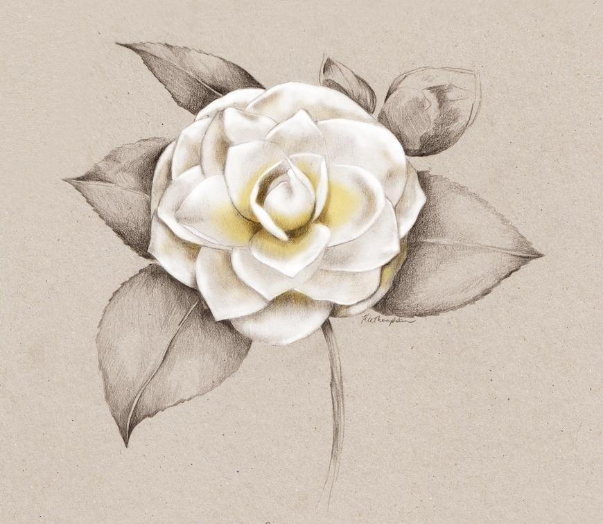 7_Kelly_thompson_Ruby_dreamers_illustration_camellia.jpg