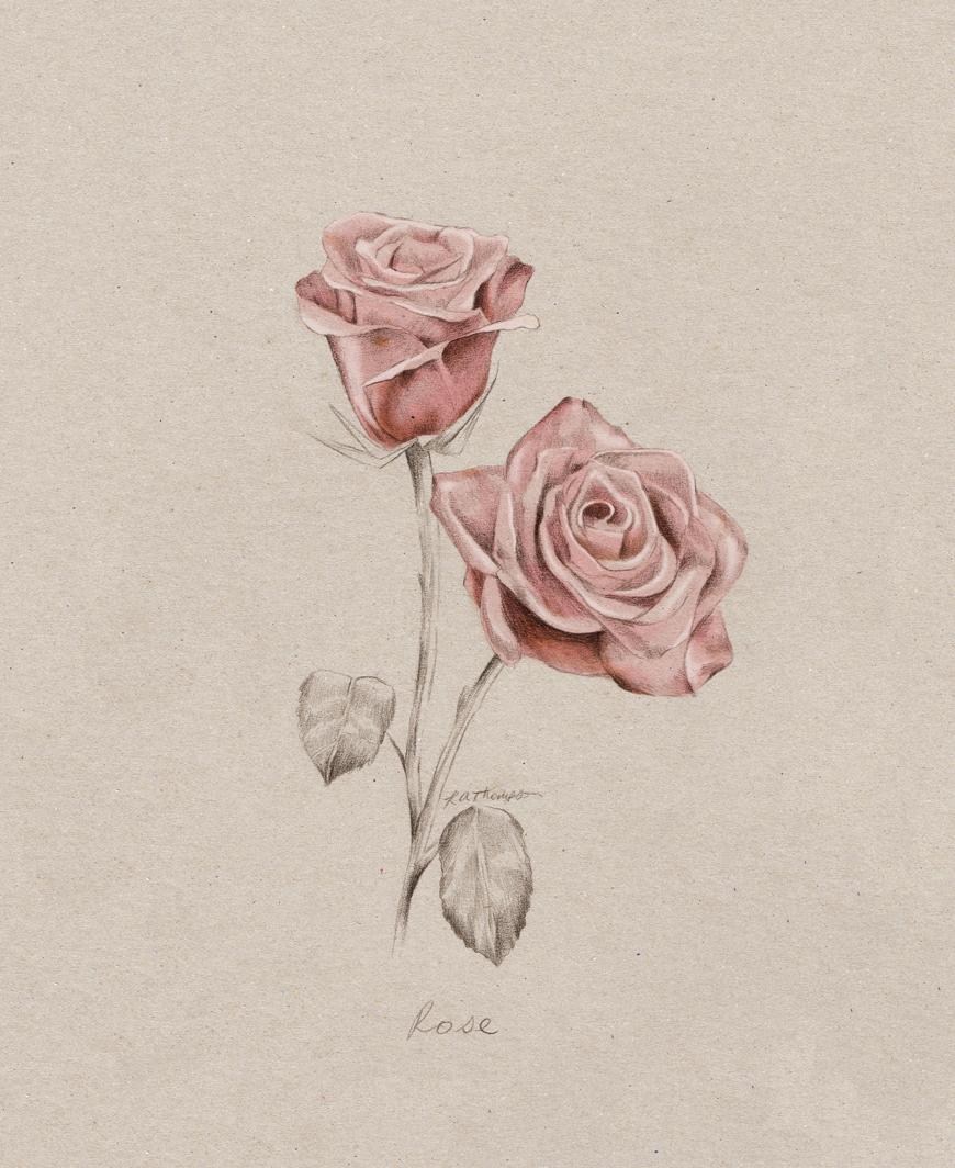 rose_botanical_illustration_blog_art_kelly_thompson_art_blog.jpg
