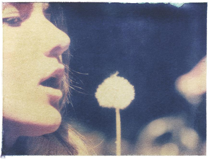 dandelion_kelly_thompson_blog_polaroid_blossoms.jpg