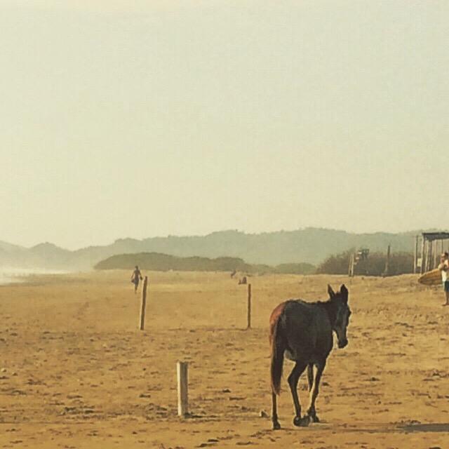 ECUADOR HORSE.jpg