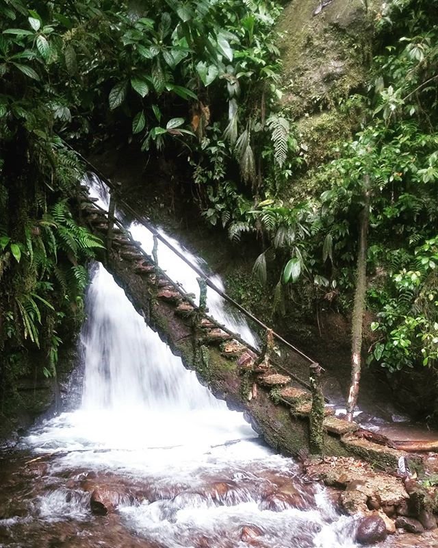 This one is from a memorable trip in 2014. We came back with a hunger for more and a sense that one day we would return. #ecuador🇪🇨 #southamericatrip #bridges_of_our_world #mindo #cloudforest #specialists #getoutdoorsmore #nols #newhorizons #ecuadortravel #travelecuador