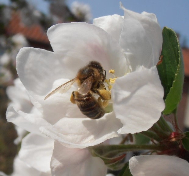 the bee and the blossom