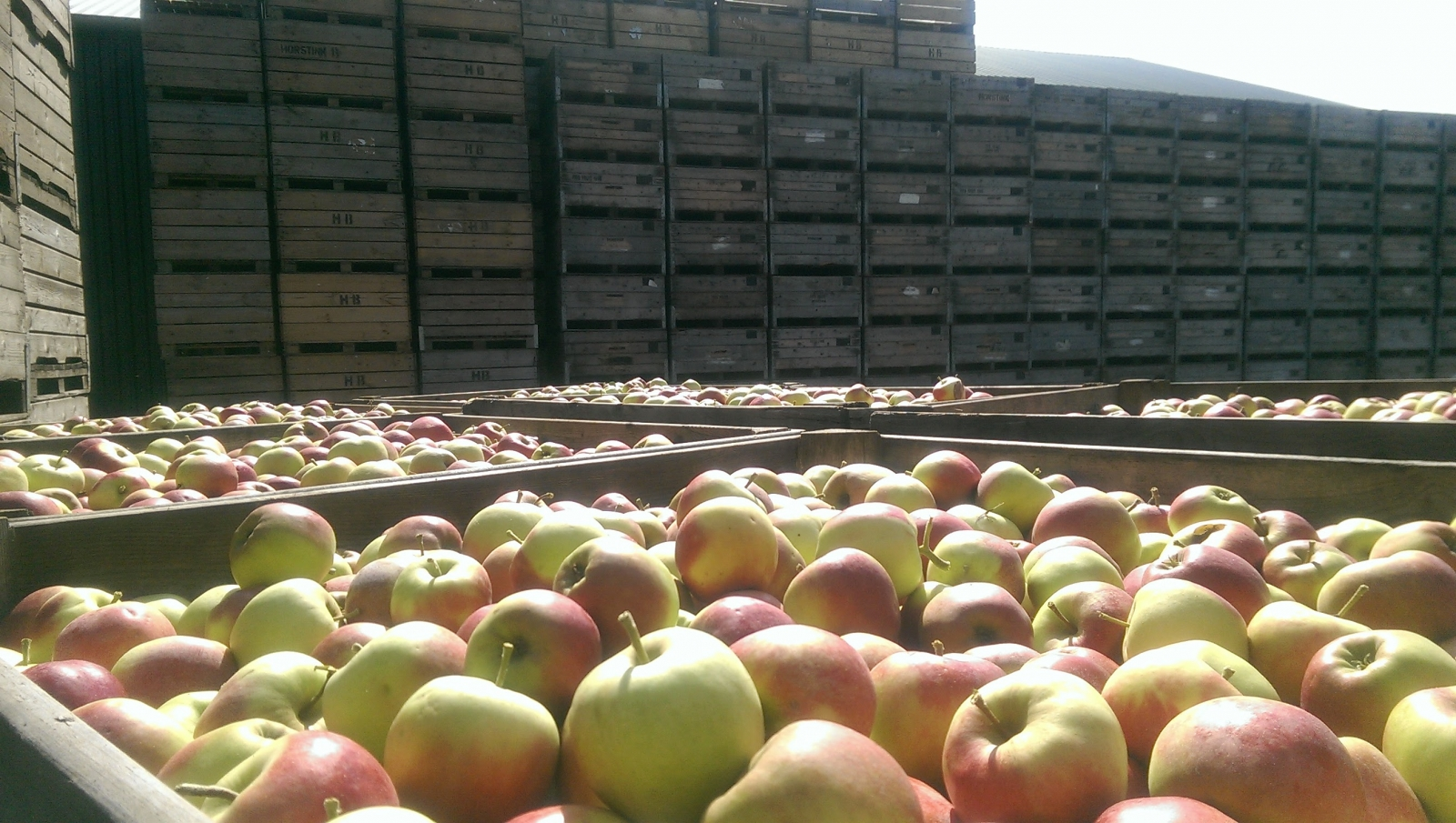 apples are stored, sometimes for months