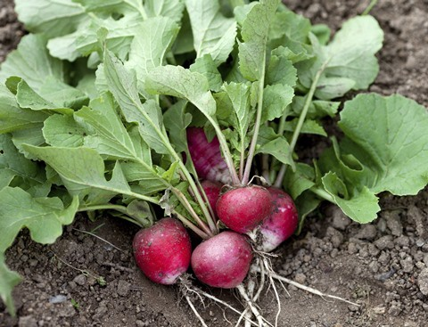Try these produce recipes from PCA