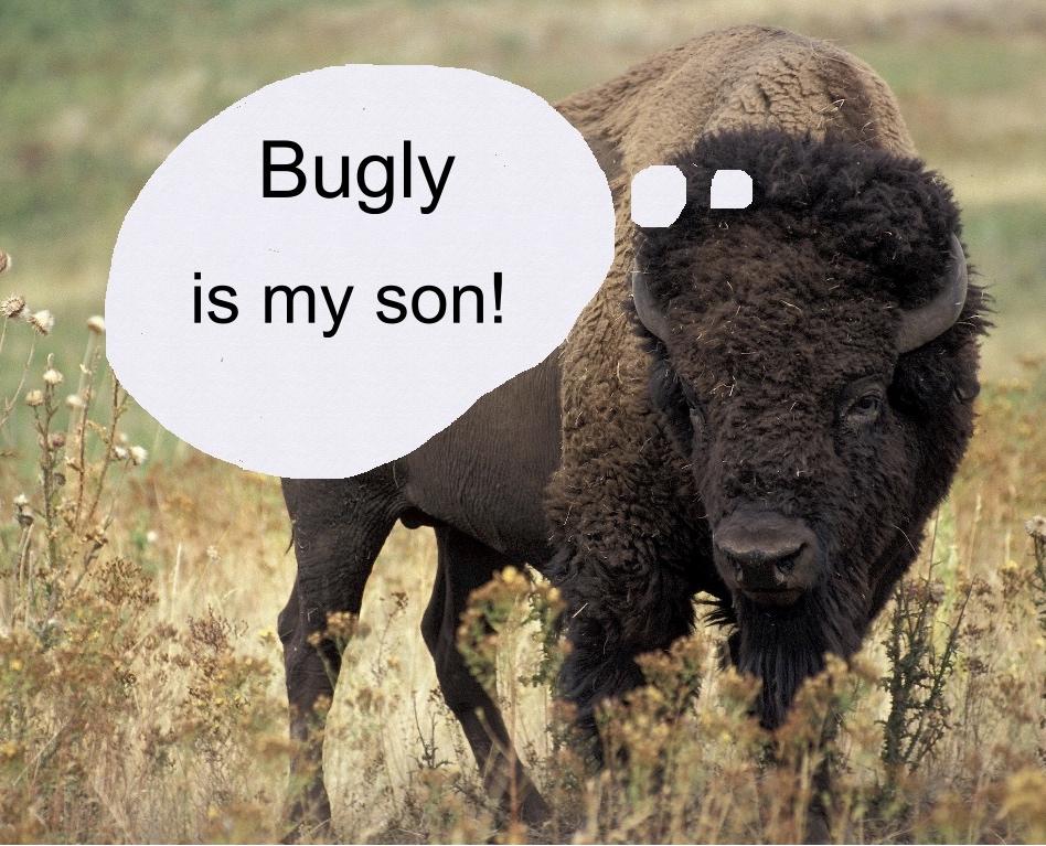 bisoncontestwinner.jpg