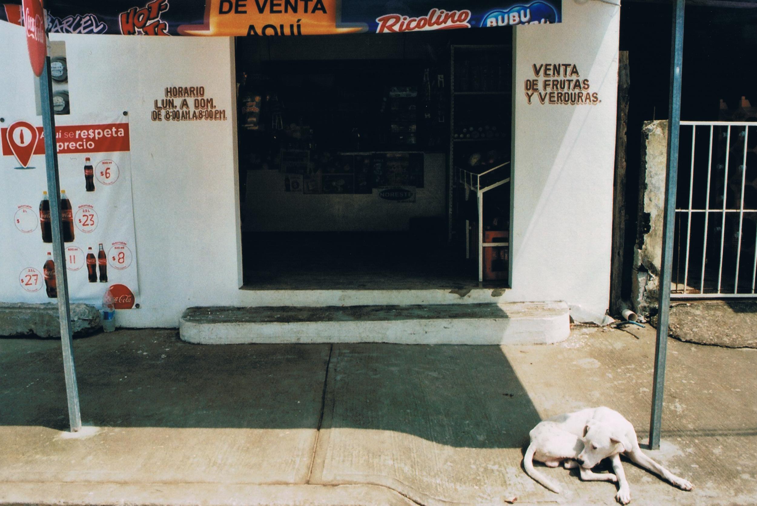 hund vor der tienda.jpeg