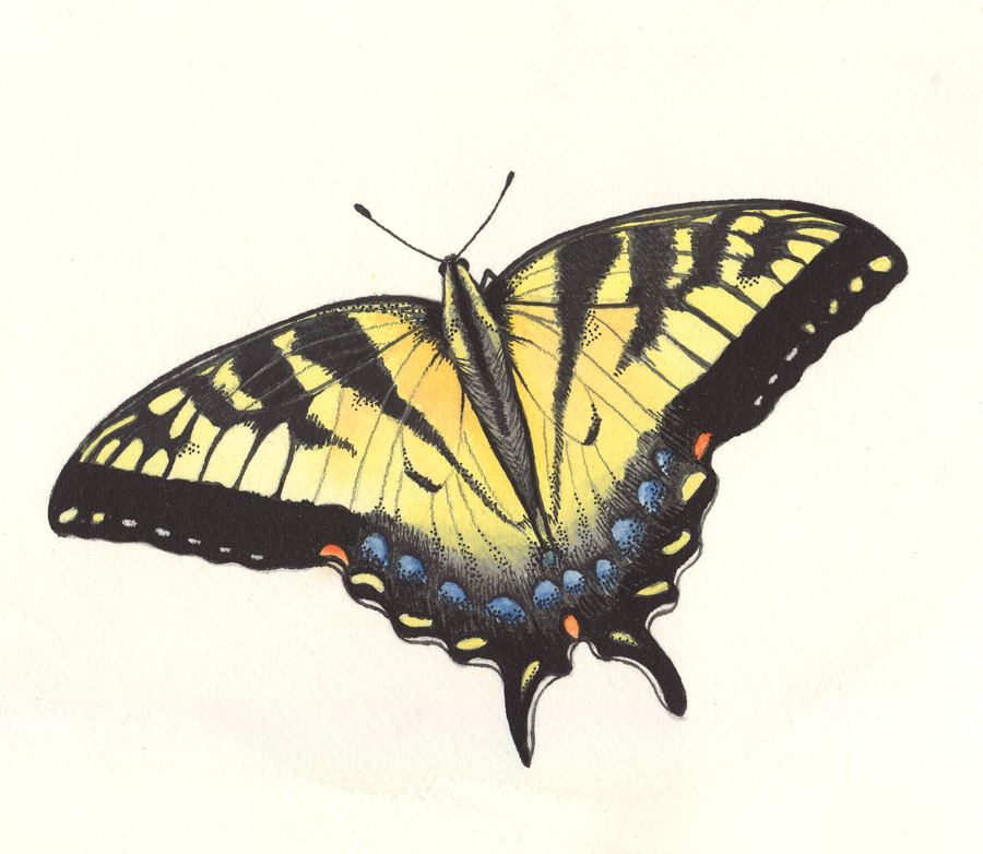 Patti King Slavtcheff_Illustration_Butterfly